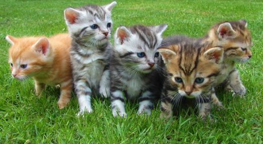 kittens1.png