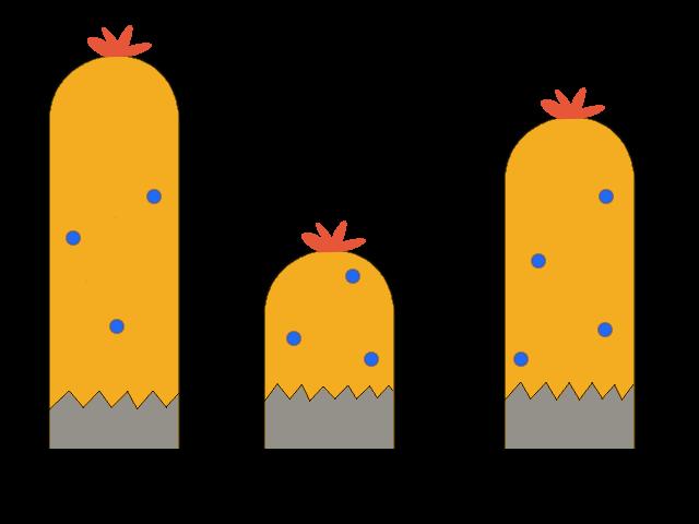 Vegetation (middle layer)
