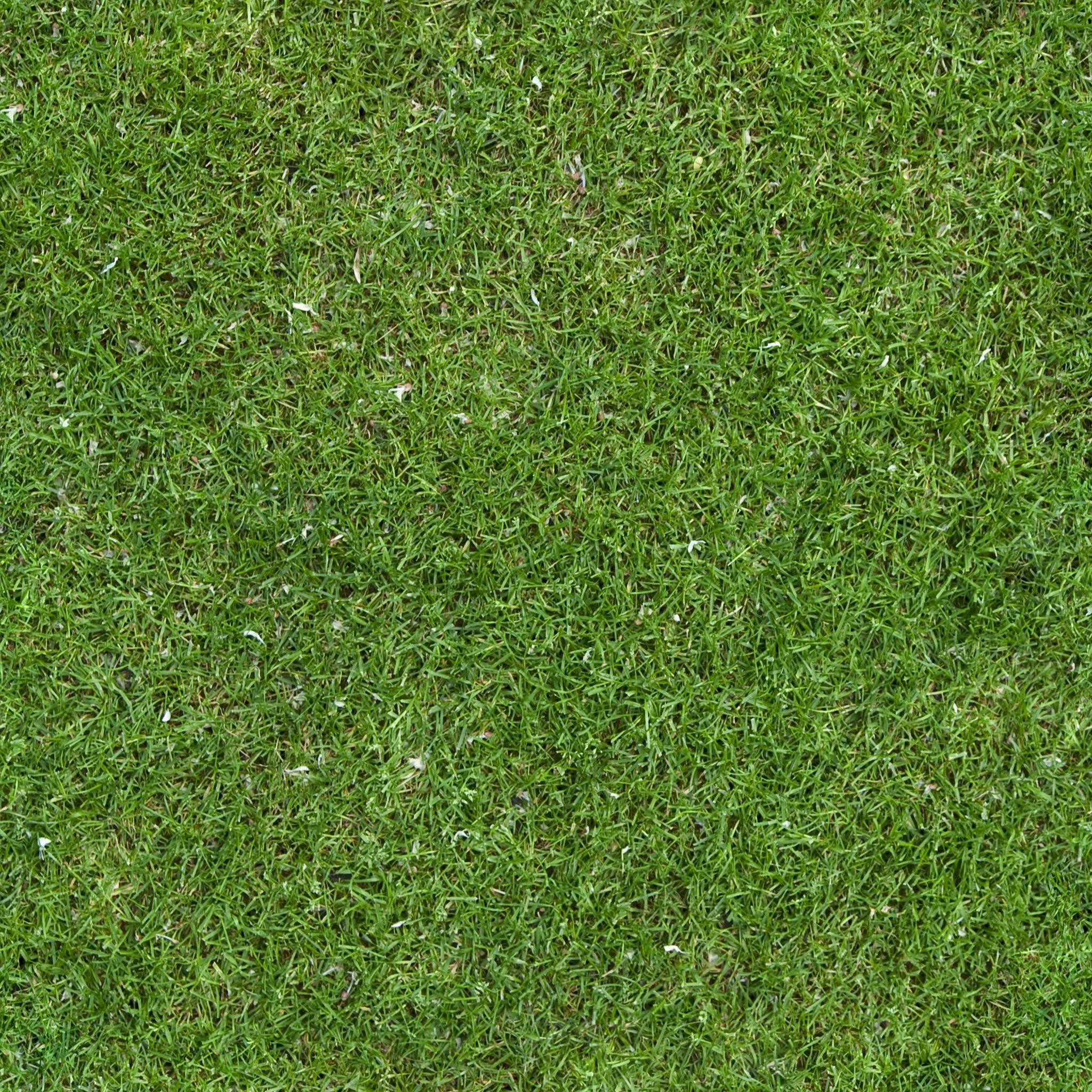 Grassgreentexture0002